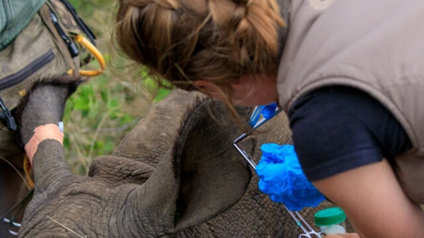 Wildlife Veterinary Course at Gondwana Game Reserve