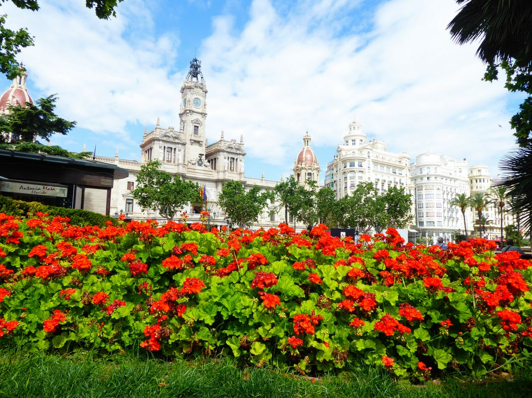Gorgeous flowers in Valencia, Spain, Intern Abroad HQ