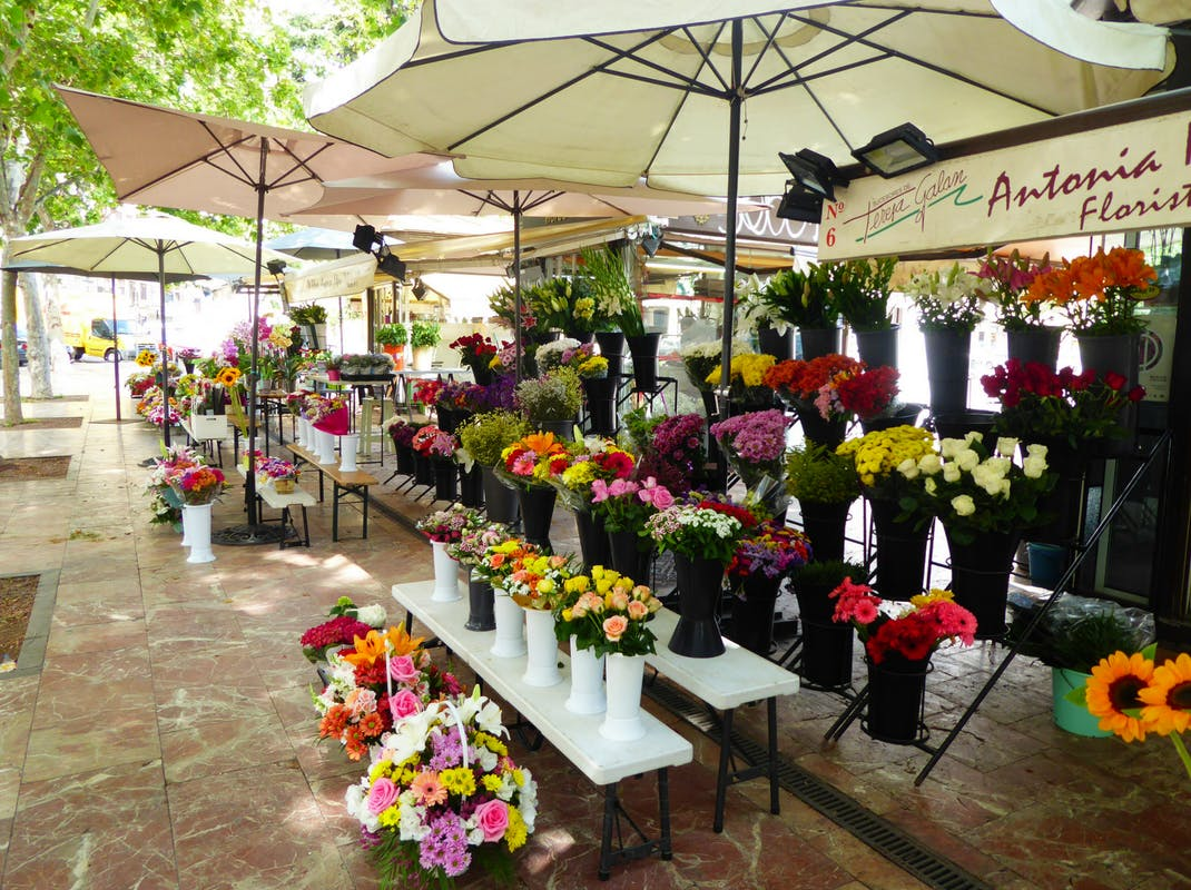 Flower markets in Valencia Spain, Intern Abroad HQ