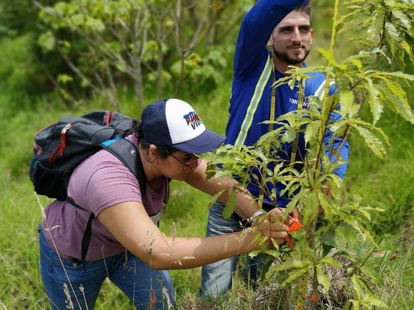 Environmental Conservation internships in Costa Rica