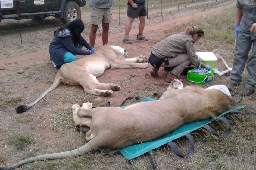Dinokeng Game Reserve Wildlife Conservation internship