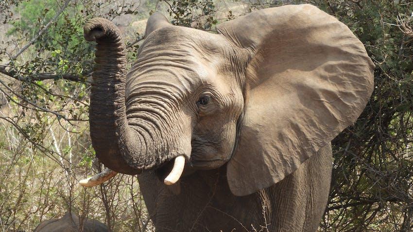Reserve Management at Kruger National Park