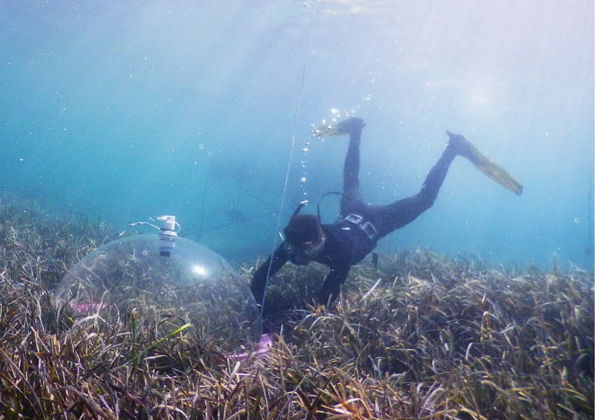 Assessment of Blue Carbon in Posidonia oceanica seagrass meadows