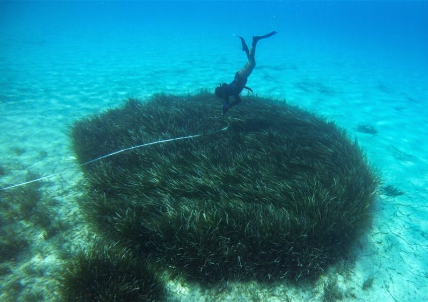 Monitoring the success of Posidonia oceanica seagrass meadows as a habitat for fish and macroinvertebrates