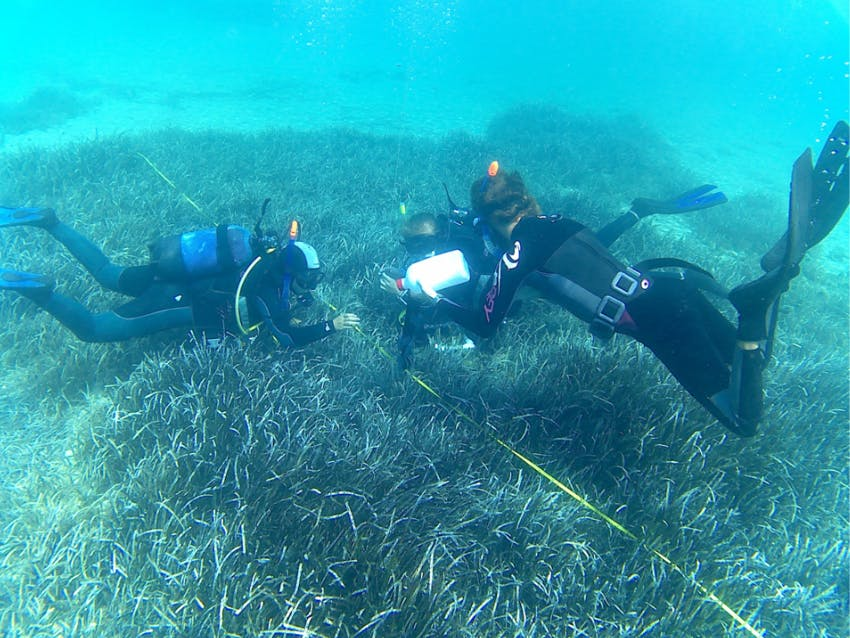 Marine Ecology remote internships out of Greece