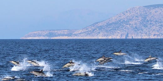 Marine Mammals Research & Conservation Remote internships From Greece