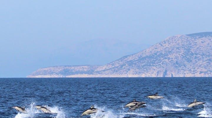 Marine Mammals Research & Conservation Remote internships From Greece