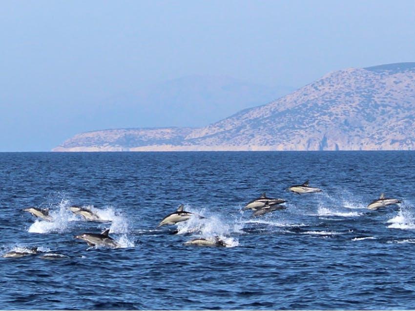 Marine Mammals Remote Internship out of Greece