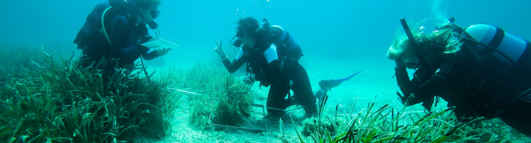 Wildlife Conservation & Environmental Internships Abroad