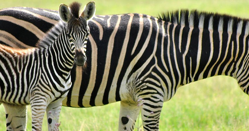 Animal Care & Wildlife Conservation Internships Abroad