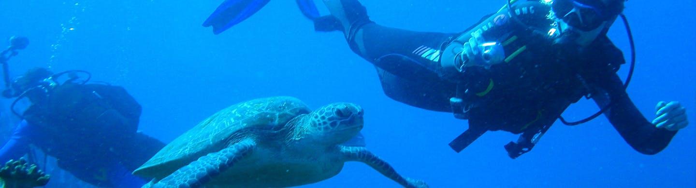 Marine Biology Internships with Intern Abroad HQ
