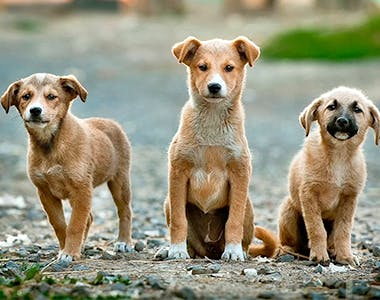 Veterinary & Animal Care